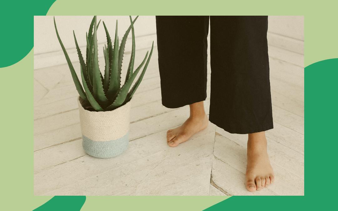 ¿Qué tipo de consumidor de Aloe Vera eres?